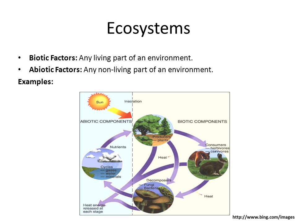 Ecosystems Biotic Factors: Any living part of an environment.
