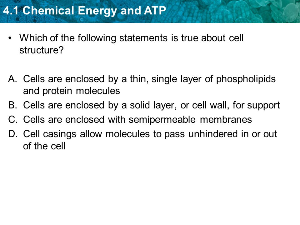 4.1 Chemical Energy and ATP Which of the following statements is true about cell structure.