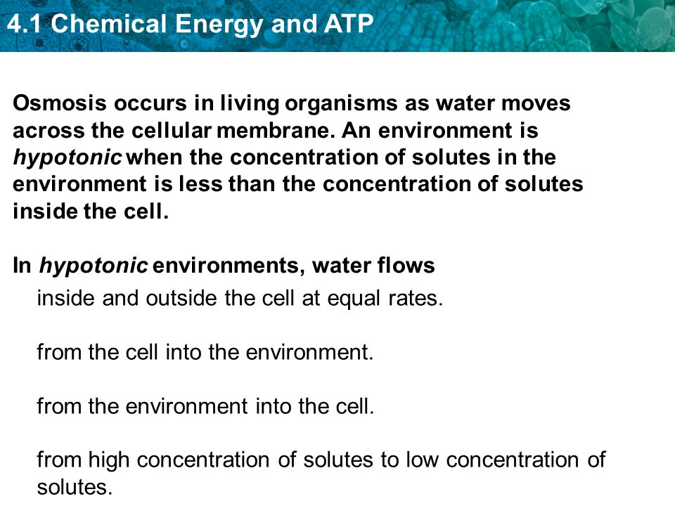 4.1 Chemical Energy and ATP Osmosis occurs in living organisms as water moves across the cellular membrane.