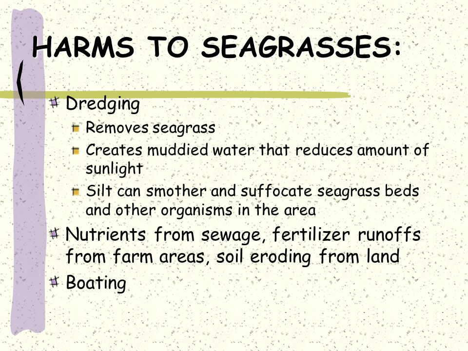 HARMS TO SEAGRASSES: Dredging Removes seagrass Creates muddied water that reduces amount of sunlight Silt can smother and suffocate seagrass beds and other organisms in the area Nutrients from sewage, fertilizer runoffs from farm areas, soil eroding from land Boating