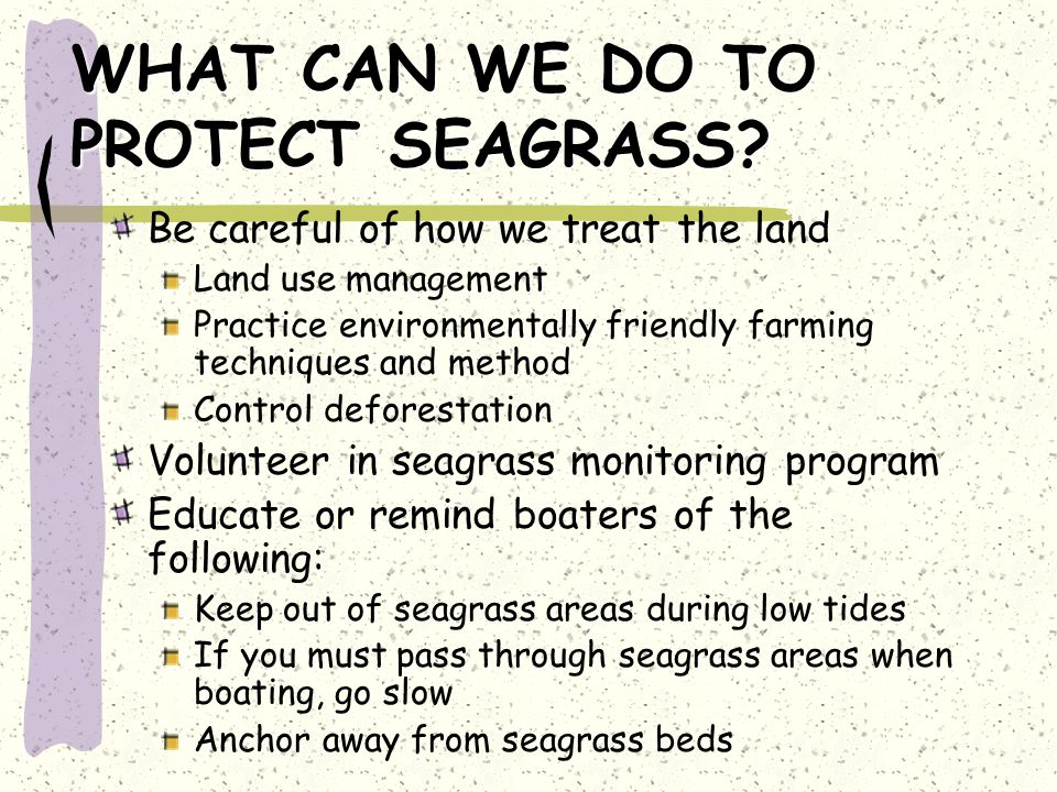 WHAT CAN WE DO TO PROTECT SEAGRASS.
