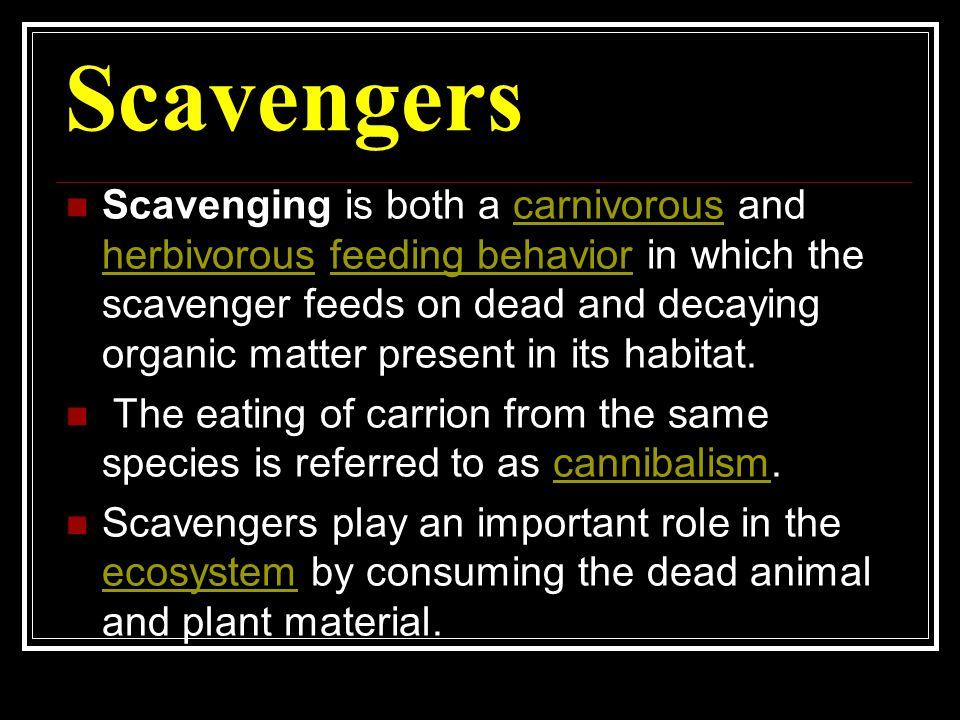 Scavengers are typically not thought to be detritivores, as they generally eat large quantities of organic matter, but both detritivores and scavengers are specific cases of consumer-resource systems.