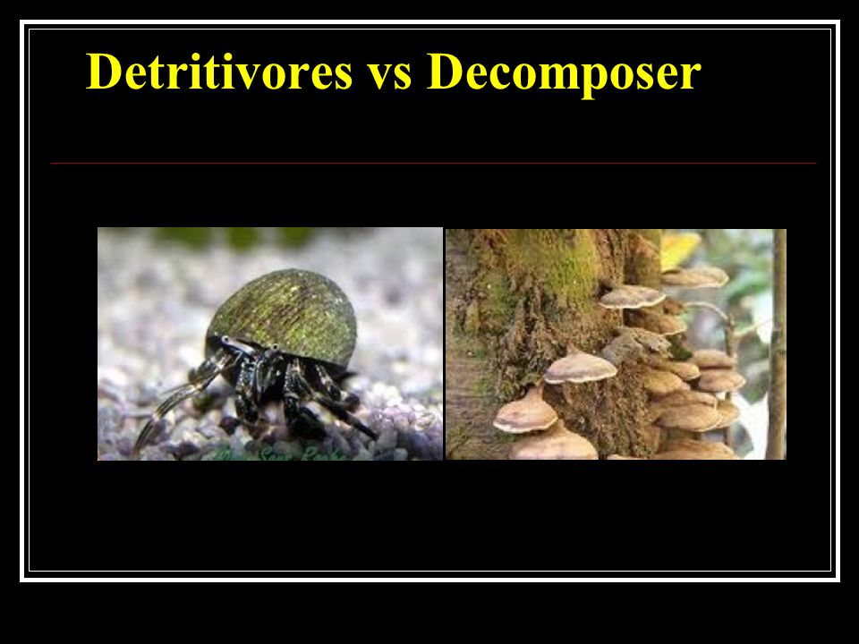 Difference between a Scavengers & Decomposer Decomposers break down organic matter while scavengers go around eating dead animals for food.