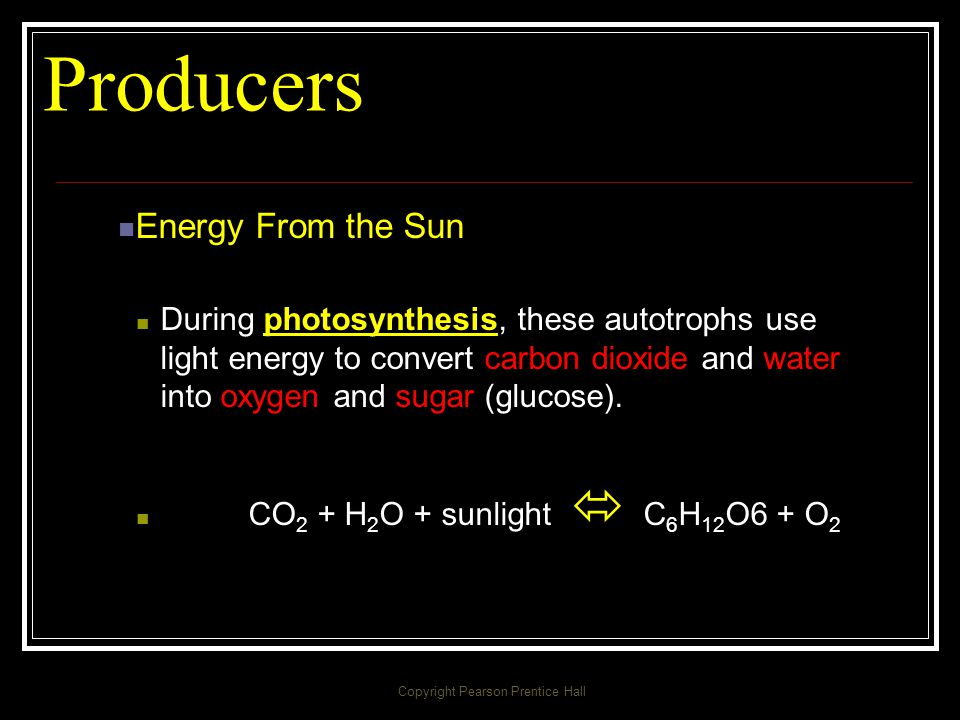 Producers/Autotroph Only plants, some algae, and certain bacteria can capture energy from sunlight or chemicals and use that energy to produce food.