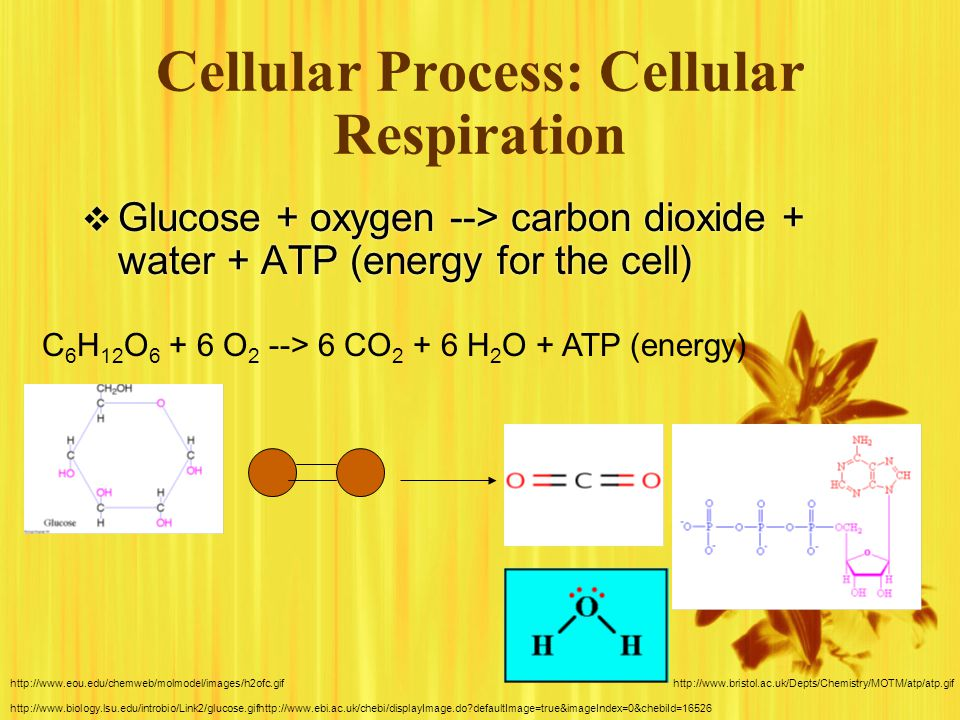 Photosynthesis & Cellular Respiration  They are interrelated.