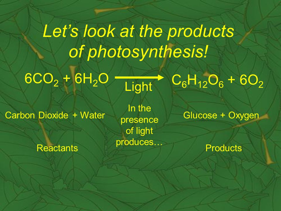 6CO 2 + 6H 2 O C 6 H 12 O 6 + 6O 2 Light Carbon Dioxide + Water In the presence of light produces… Glucose + Oxygen Let's look at the products of photosynthesis.