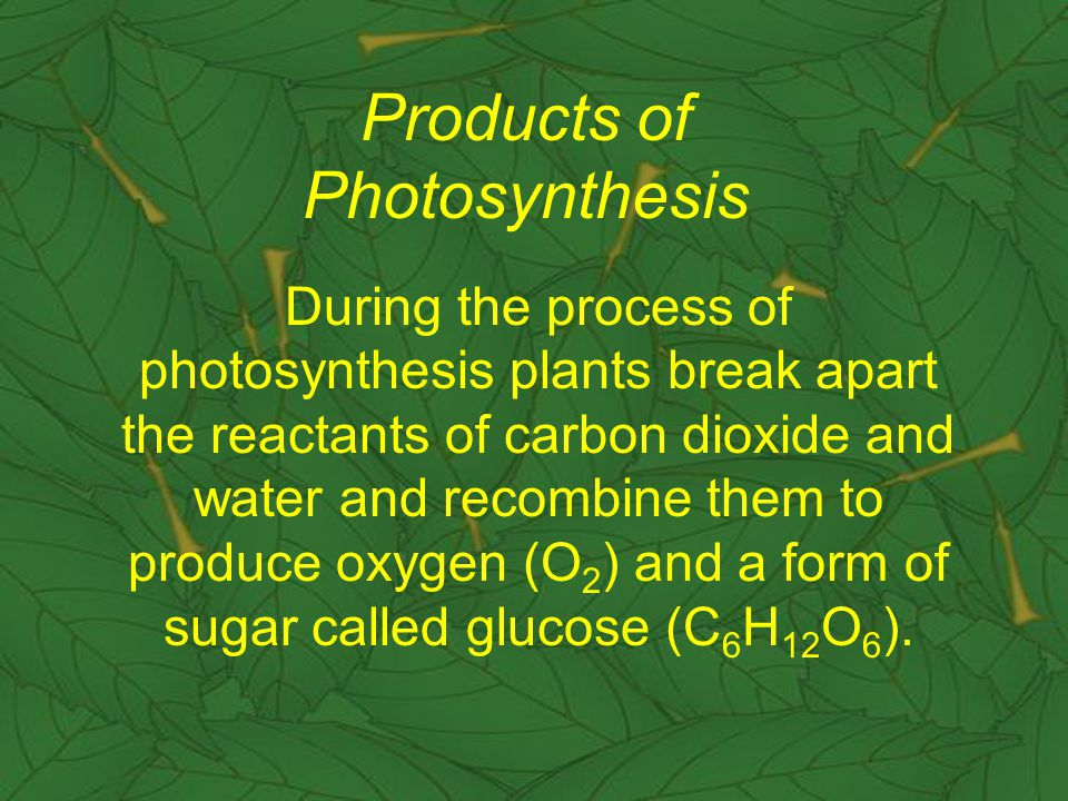 Products of Photosynthesis During the process of photosynthesis plants break apart the reactants of carbon dioxide and water and recombine them to produce oxygen (O 2 ) and a form of sugar called glucose (C 6 H 12 O 6 ).
