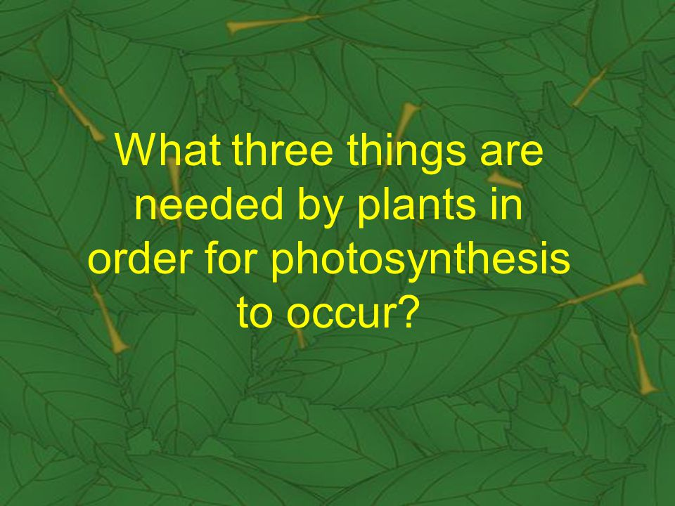 What three things are needed by plants in order for photosynthesis to occur