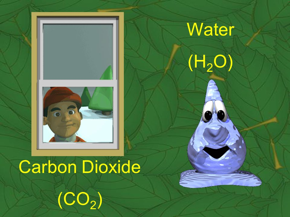 Carbon Dioxide (CO 2 ) Water (H 2 O)