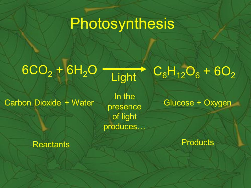 Reactants of Photosynthesis CLICK HERE