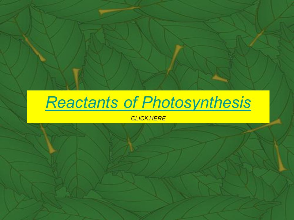 During photosynthesis how do plants take in water (H 2 O).