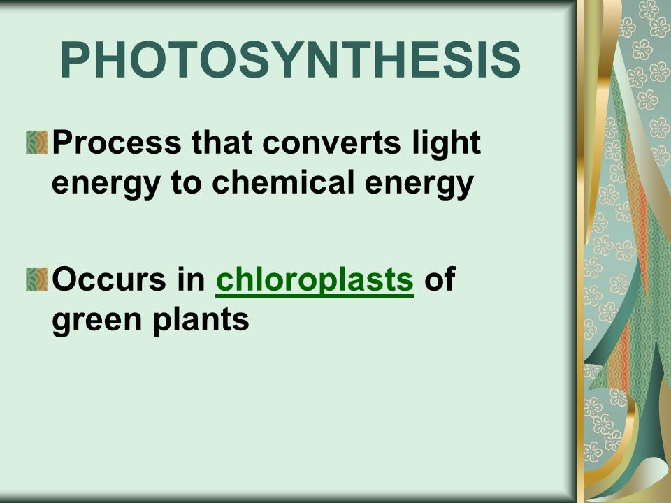 PHOTOSYSTEM 2 Water-splitting photosystem Produces hydrogen ions (H + ) and releases oxygen (O 2 ) as a waste product Electrons released in splitting H 2 O are used to make ATP
