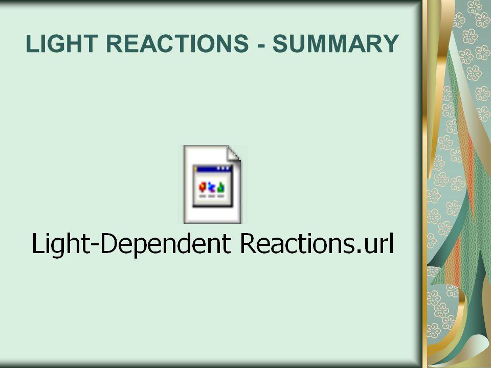 LIGHT REACTIONS - SUMMARY