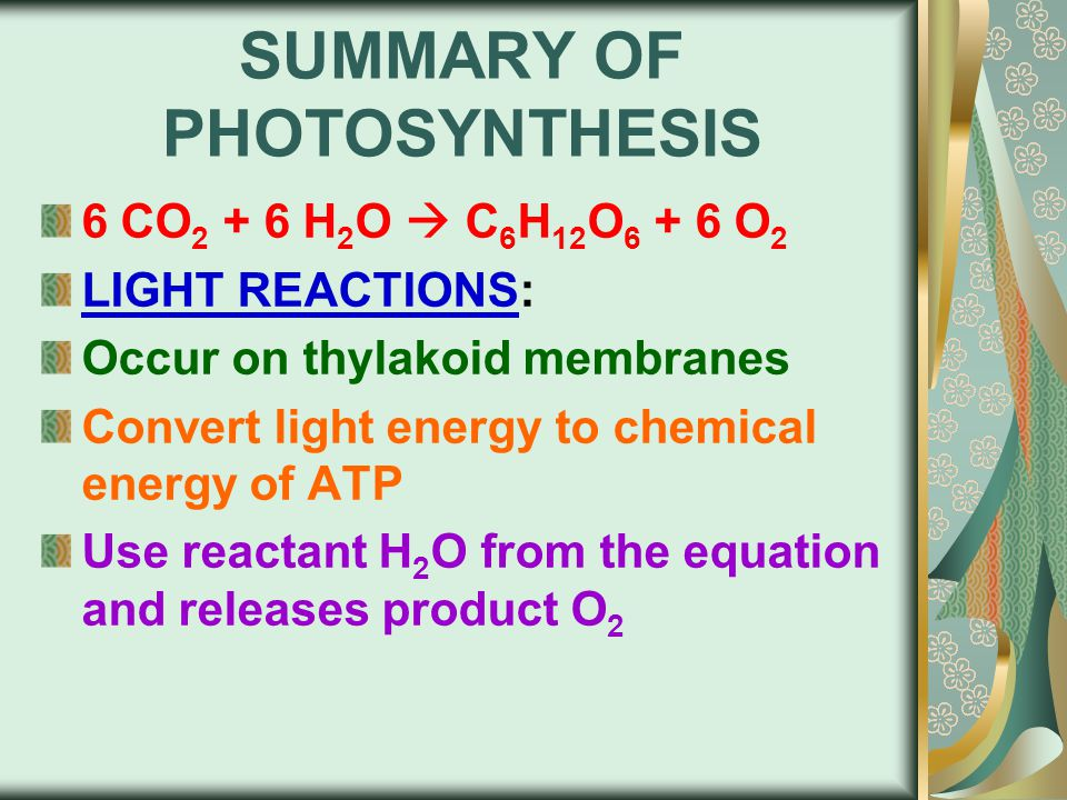 6 CO 2 + 6 H 2 O  C 6 H 12 O 6 + 6 O 2 LIGHT REACTIONS: Occur on thylakoid membranes Convert light energy to chemical energy of ATP Use reactant H 2 O from the equation and releases product O 2