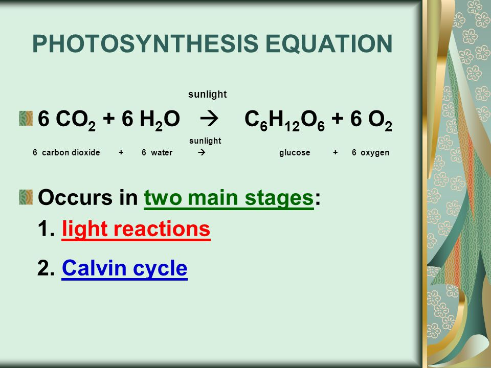 PHOTOSYNTHESIS EQUATION sunlight 6 CO 2 + 6 H 2 O  C 6 H 12 O 6 + 6 O 2 sunlight 6 carbon dioxide + 6 water  glucose + 6 oxygen Occurs in two main stages: 1.