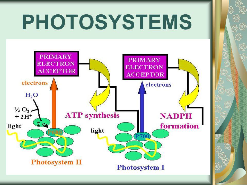 PHOTOSYSTEMS