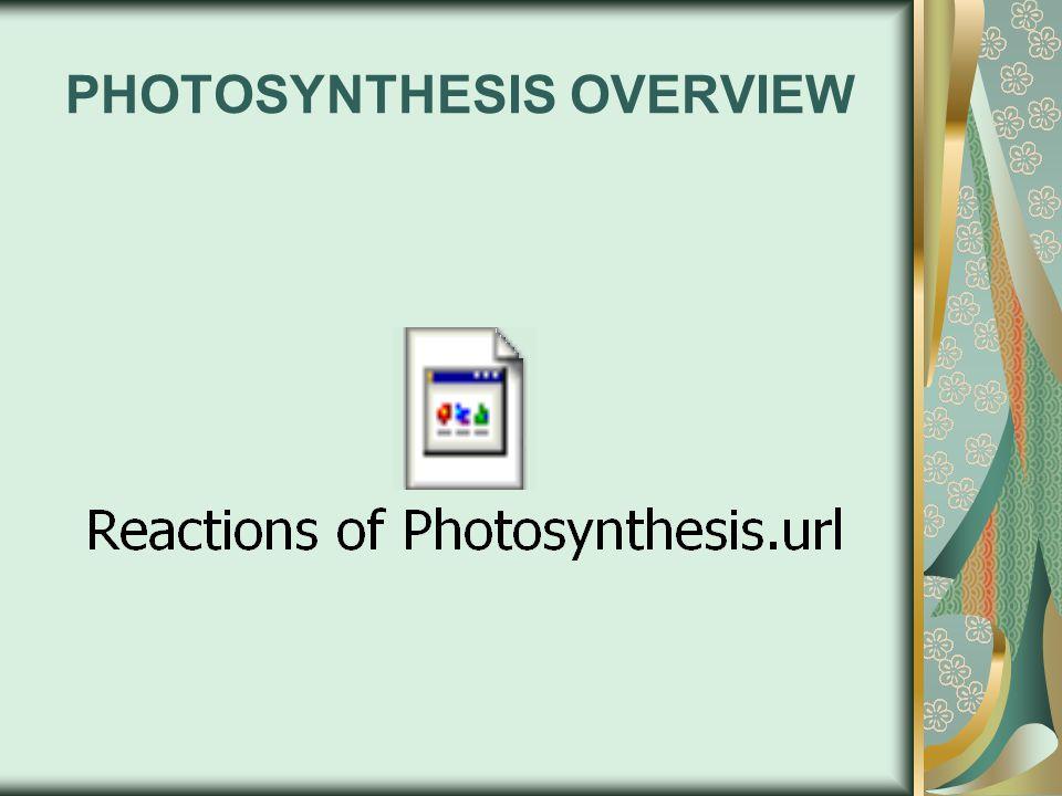 PHOTOSYTEMS & ATP PRODUCTION