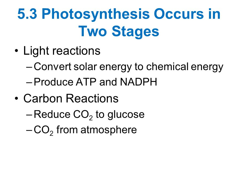 5.3 Photosynthesis Occurs in Two Stages Light reactions –Convert solar energy to chemical energy –Produce ATP and NADPH Carbon Reactions –Reduce CO 2