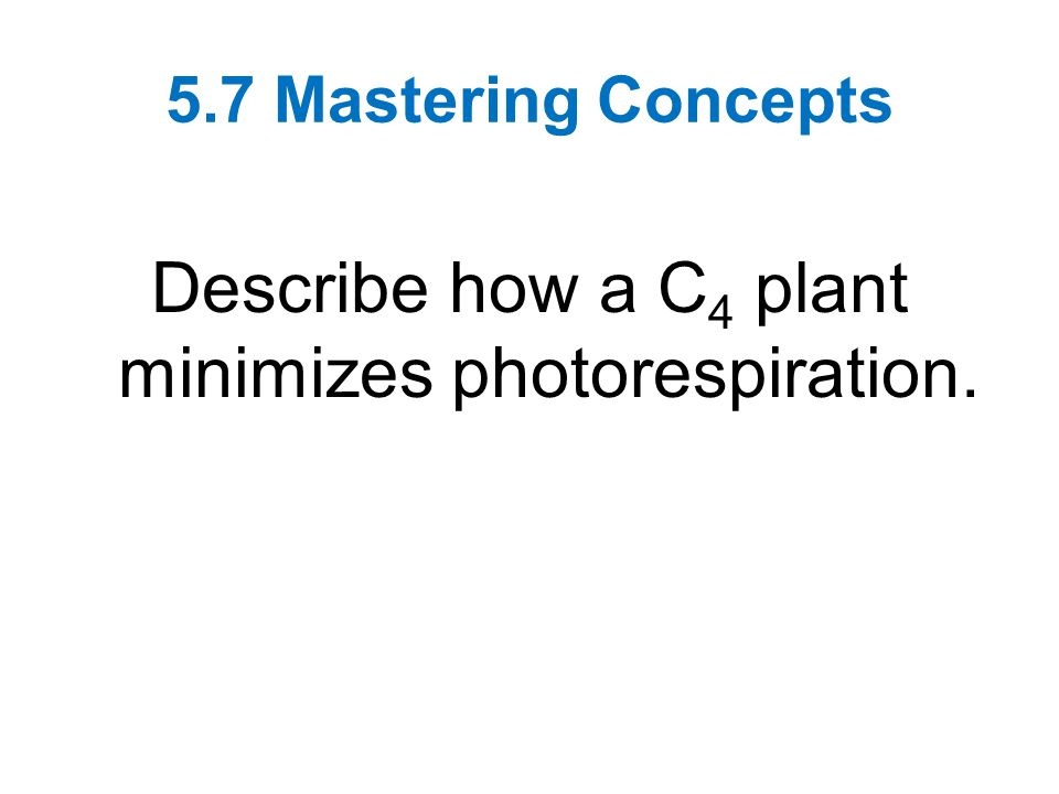5.7 Mastering Concepts Describe how a C 4 plant minimizes photorespiration.