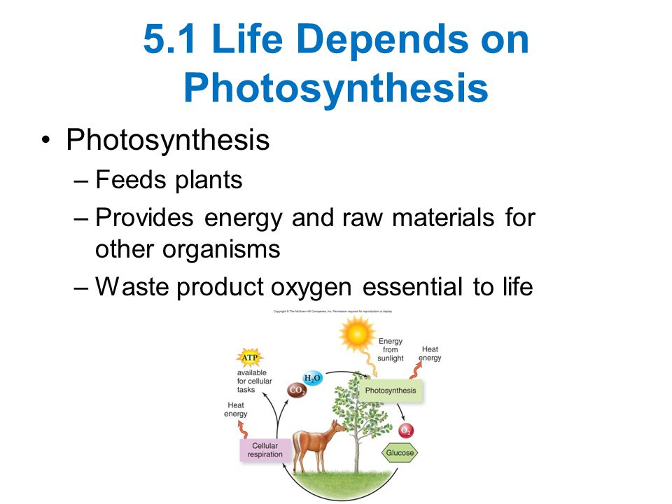 5.1 Life Depends on Photosynthesis Photosynthesis –Feeds plants –Provides energy and raw materials for other organisms –Waste product oxygen essential to life