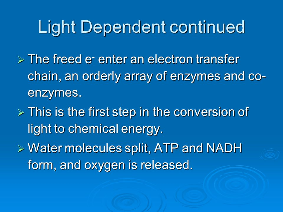 Light Dependent continued  The freed e - enter an electron transfer chain, an orderly array of enzymes and co- enzymes.  This is the first step in t