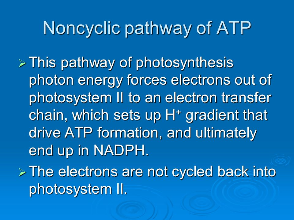 Noncyclic pathway of ATP  This pathway of photosynthesis photon energy forces electrons out of photosystem II to an electron transfer chain, which se