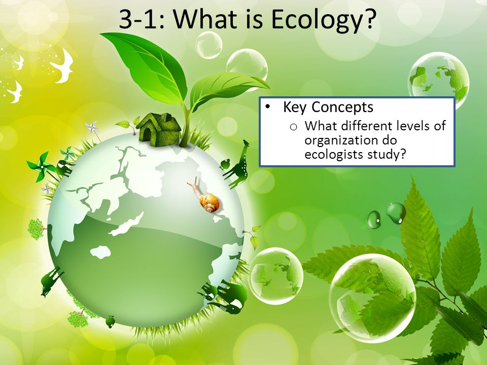 3-1: What is Ecology? Key Concepts o What different levels of organization do ecologists study?