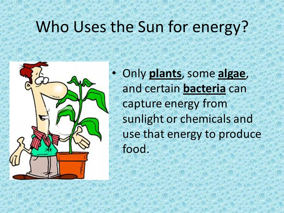 Who Uses the Sun for energy? Only plants, some algae, and certain bacteria can capture energy from sunlight or chemicals and use that energy to produc