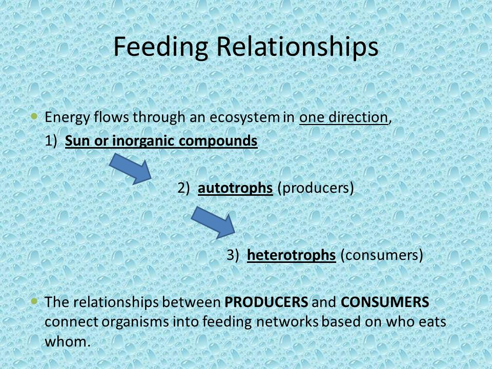 Feeding Relationships Energy flows through an ecosystem in one direction, 1) Sun or inorganic compounds 2) autotrophs (producers) 3) heterotrophs (con