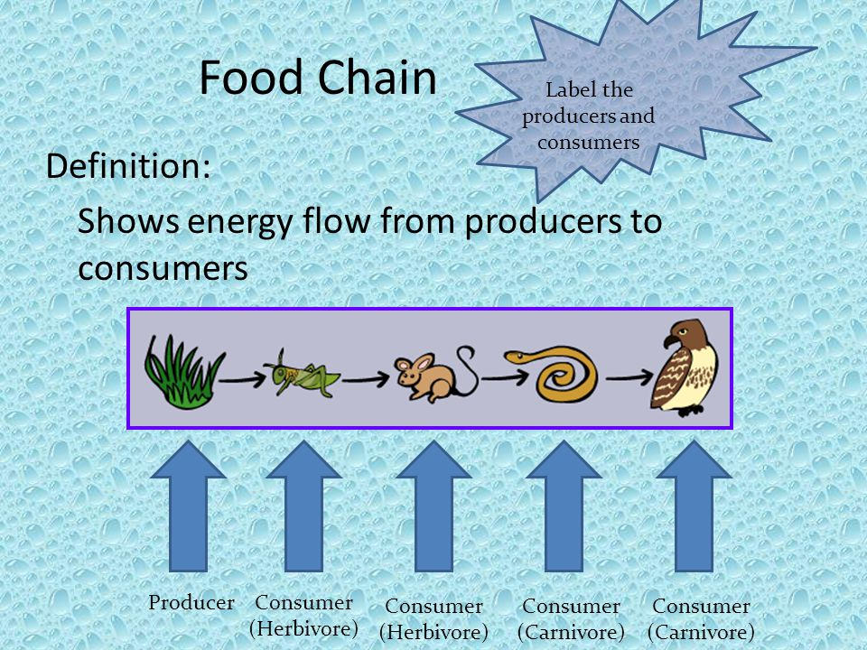 Food Chain Definition: Shows energy flow from producers to consumers Label the producers and consumers ProducerConsumer (Herbivore) Consumer (Herbivor
