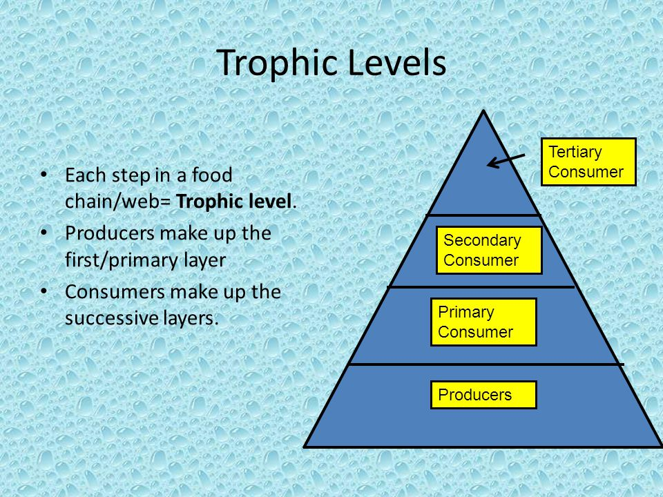 Trophic Levels Each step in a food chain/web= Trophic level. Producers make up the first/primary layer Consumers make up the successive layers. Tertia