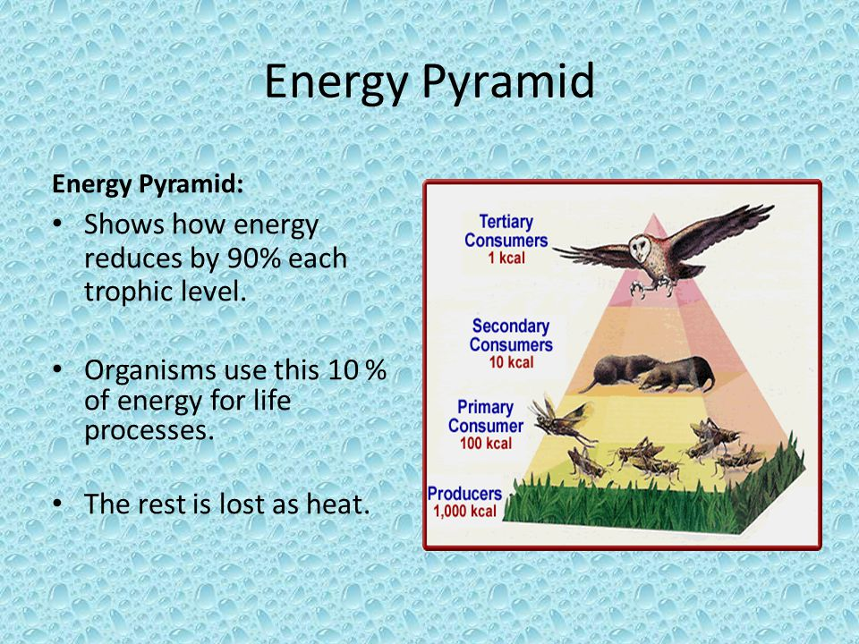 Energy Pyramid Energy Pyramid: Shows how energy reduces by 90% each trophic level. Organisms use this 10 % of energy for life processes. The rest is l