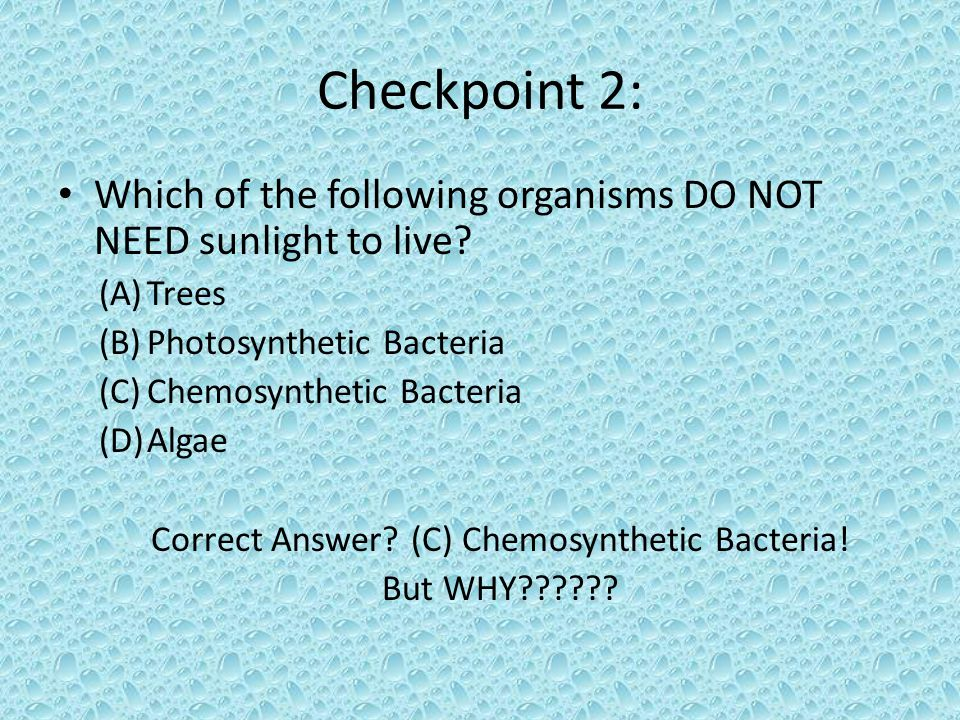 Checkpoint 2: Which of the following organisms DO NOT NEED sunlight to live? (A)Trees (B)Photosynthetic Bacteria (C)Chemosynthetic Bacteria (D)Algae C