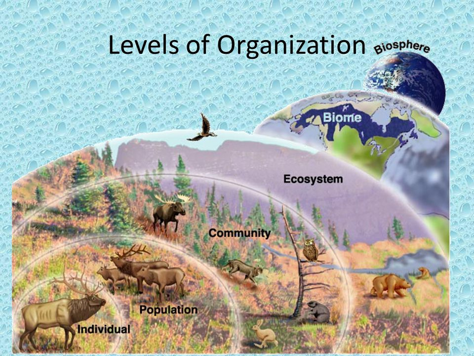 Food Webs Definition: A food web links all the food chains in an ecosystem together.