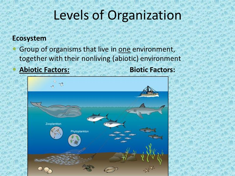 Levels of Organization Ecosystem Group of organisms that live in one environment, together with their nonliving (abiotic) environment Abiotic Factors: