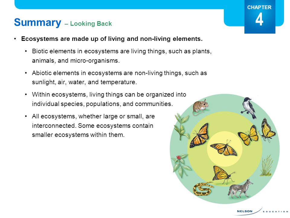 Summary – Looking Back CHAPTER 4 Ecosystems are made up of living and non-living elements.