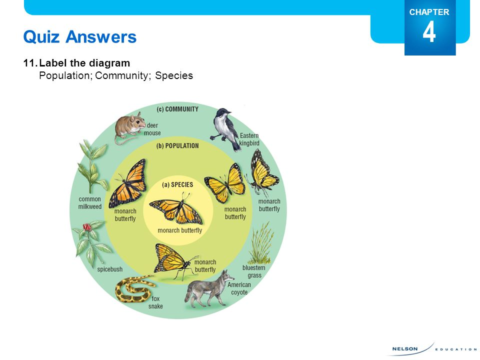 Quiz Answers 11.Label the diagram Population; Community; Species CHAPTER 4