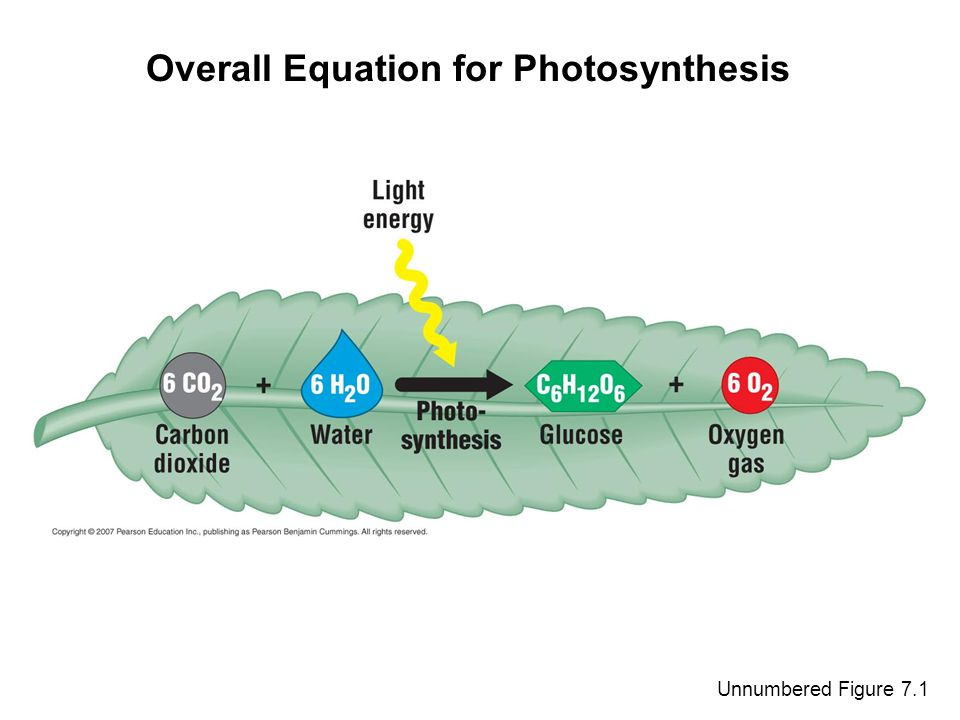 Unnumbered Figure 7.1 Overall Equation for Photosynthesis