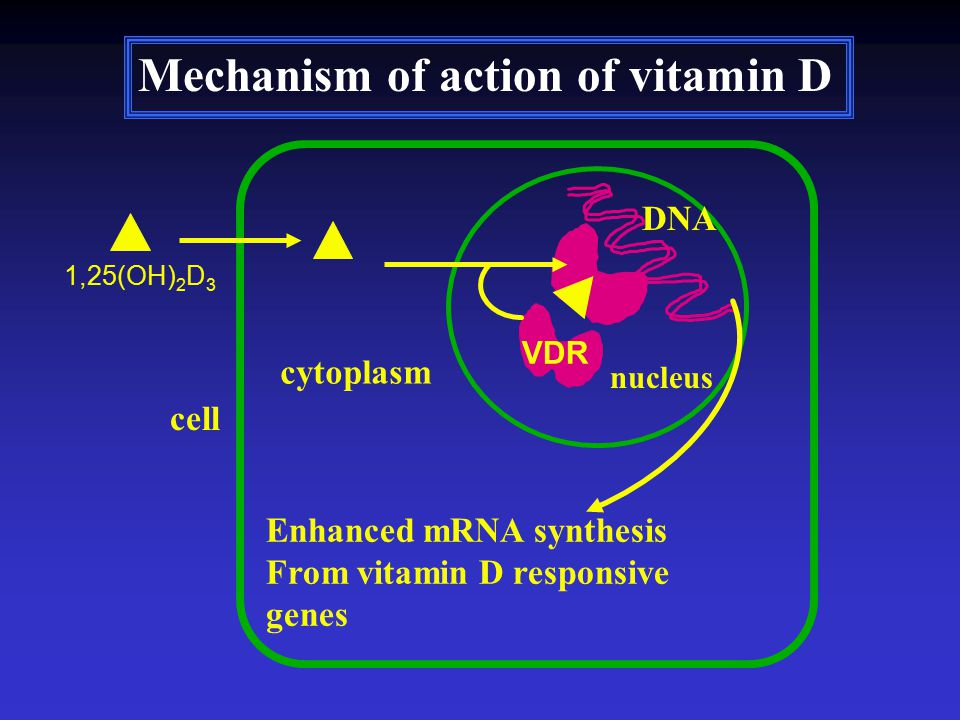 VDR Enhanced mRNA synthesis From vitamin D responsive genes 1,25(OH) 2 D 3 cell cytoplasm nucleus DNA Mechanism of action of vitamin D