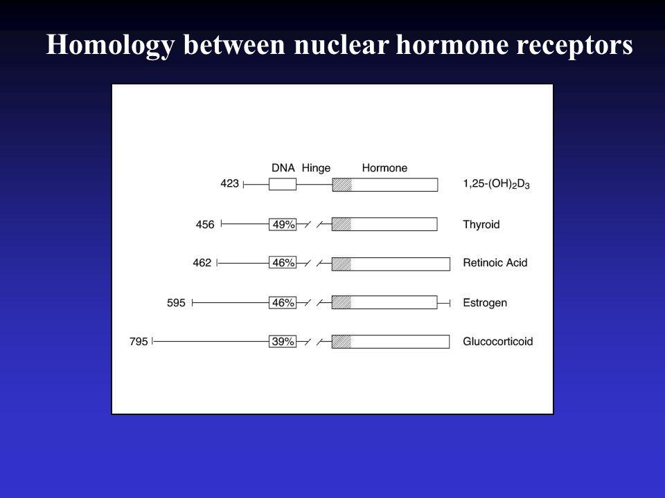 Homology between nuclear hormone receptors