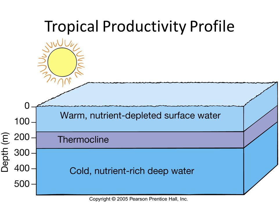 Tropical Productivity Profile