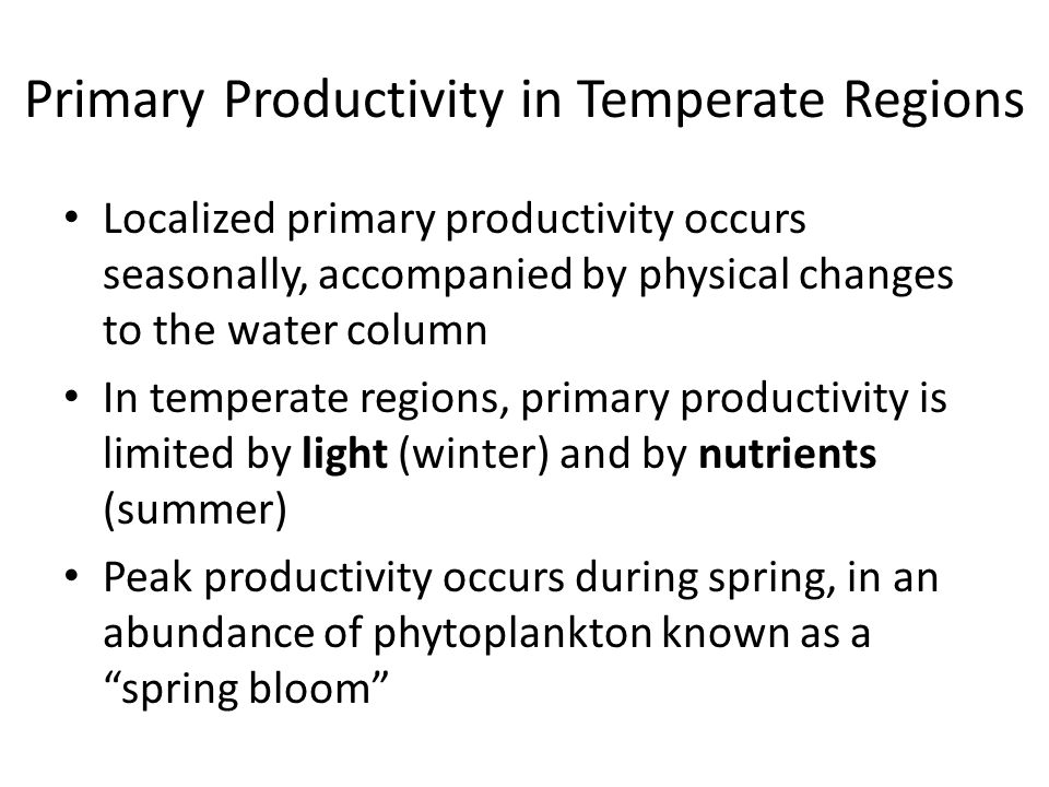 Primary Productivity in Temperate Regions Localized primary productivity occurs seasonally, accompanied by physical changes to the water column In temperate regions, primary productivity is limited by light (winter) and by nutrients (summer) Peak productivity occurs during spring, in an abundance of phytoplankton known as a spring bloom