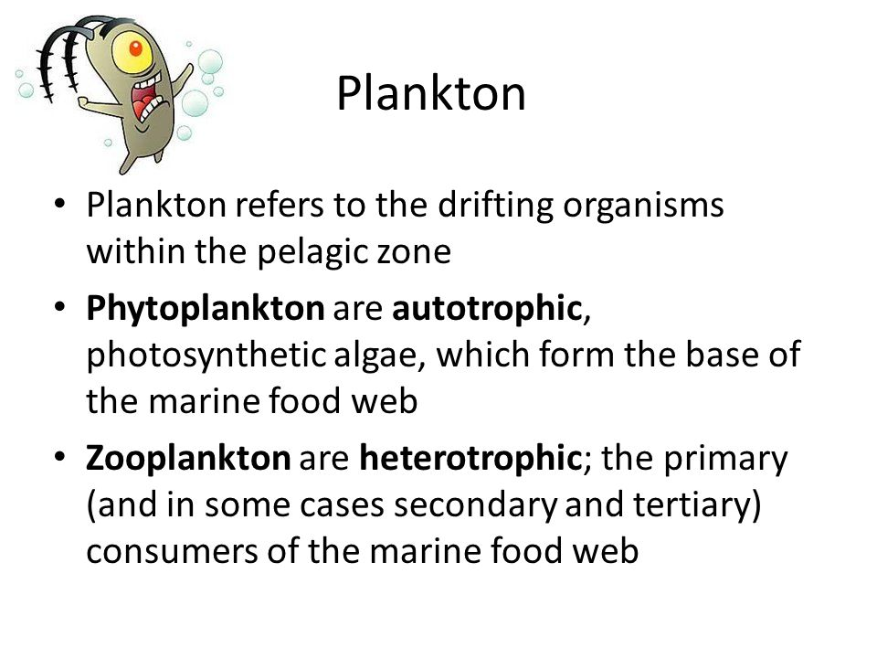Plankton Plankton refers to the drifting organisms within the pelagic zone Phytoplankton are autotrophic, photosynthetic algae, which form the base of the marine food web Zooplankton are heterotrophic; the primary (and in some cases secondary and tertiary) consumers of the marine food web