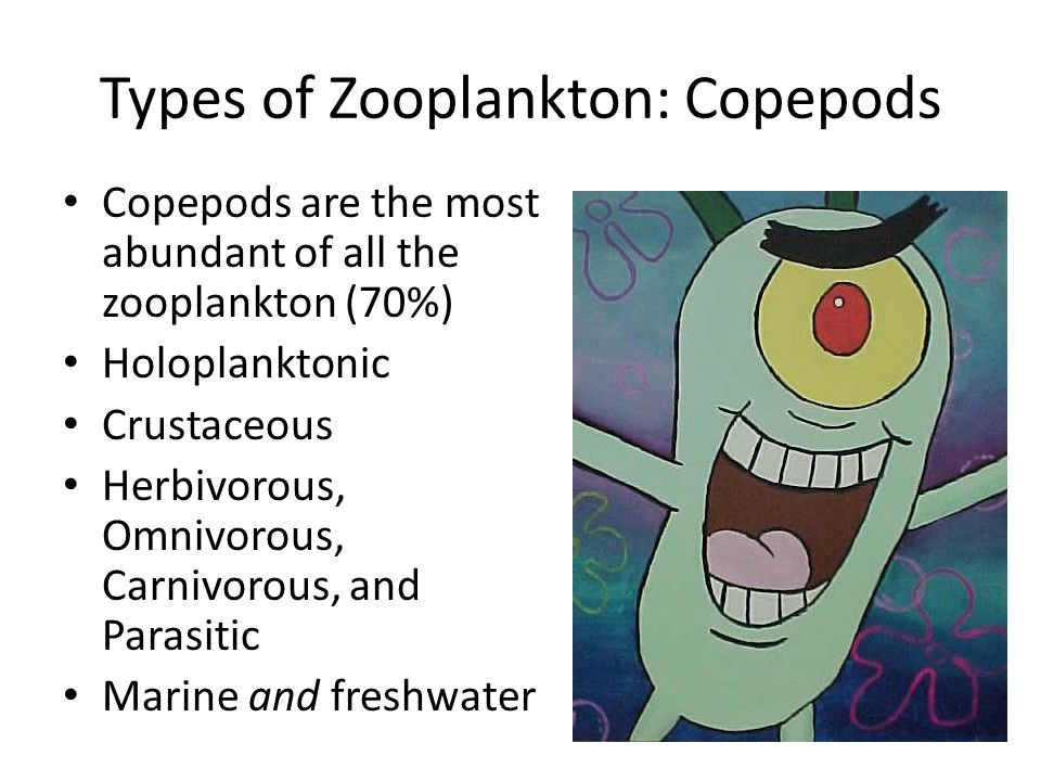 Types of Zooplankton: Copepods Copepods are the most abundant of all the zooplankton (70%) Holoplanktonic Crustaceous Herbivorous, Omnivorous, Carnivorous, and Parasitic Marine and freshwater