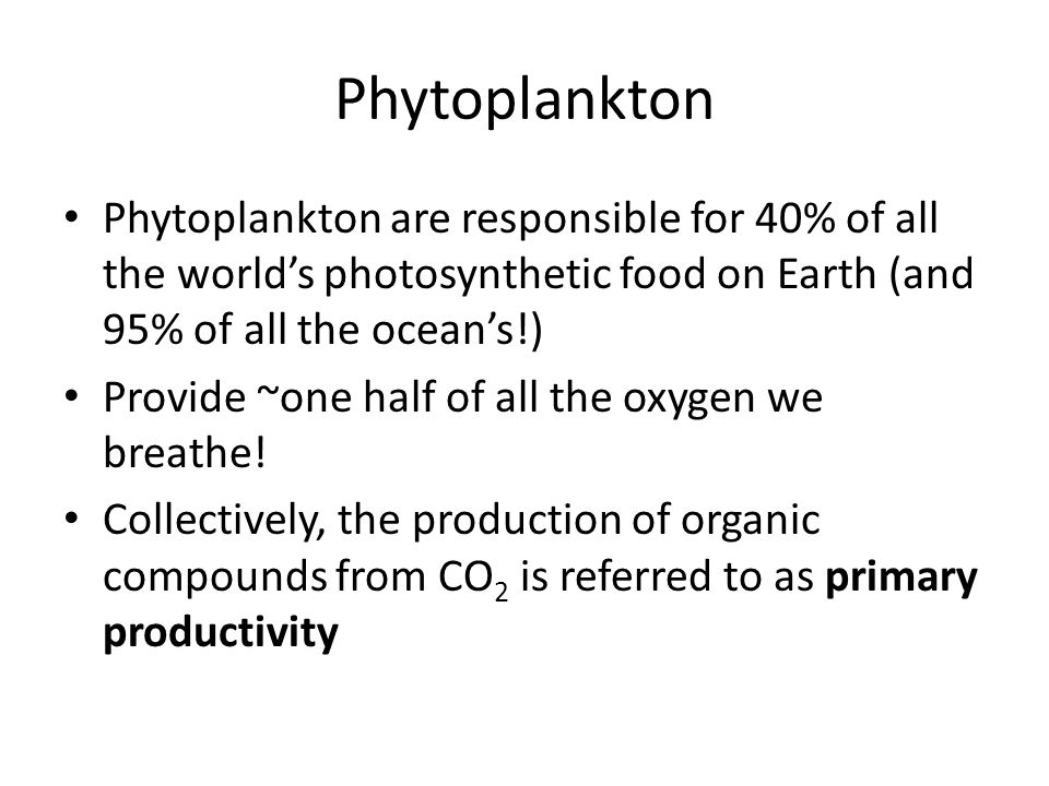 Phytoplankton Phytoplankton are responsible for 40% of all the world's photosynthetic food on Earth (and 95% of all the ocean's!) Provide ~one half of