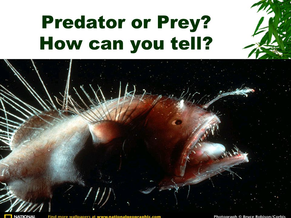 Predator or Prey? How can you tell?