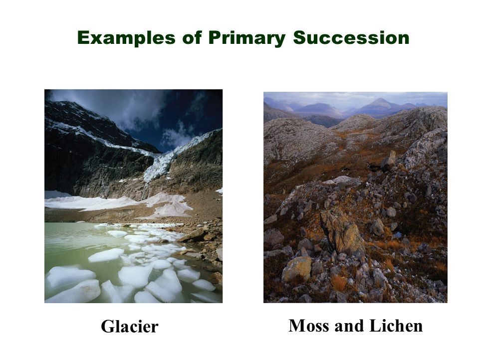 Examples of Primary Succession Moss and Lichen Glacier