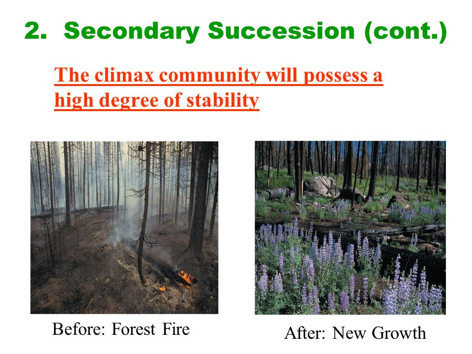 2. Secondary Succession (cont.) The climax community will possess a high degree of stability Before: Forest Fire After: New Growth