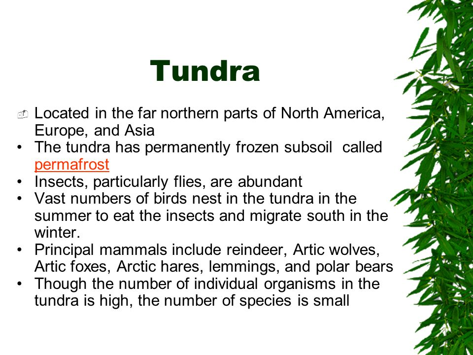 Tundra  Located in the far northern parts of North America, Europe, and Asia The tundra has permanently frozen subsoil called permafrost Insects, par