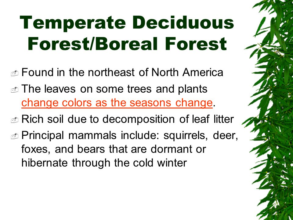 Temperate Deciduous Forest/Boreal Forest  Found in the northeast of North America  The leaves on some trees and plants change colors as the seasons